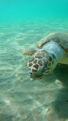 When Life Gives You Lemons - Sea Turtle Caretta - Caretta Zakynthos Island Greece by GiannisXenos Underwater Photography