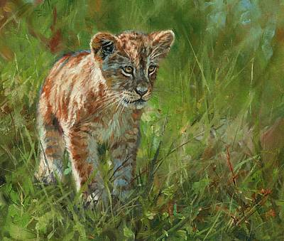 Royalty-Free and Rights-Managed Images - Lion Cub by David Stribbling