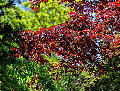 Bringing The Outdoors In - Spring Leaves by Robert Ullmann