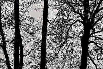 Clouds Rights Managed Images - Spring Trees Royalty-Free Image by Robert Ullmann