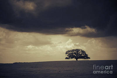 1-war Is Hell Royalty Free Images - 69 / Tree Landscape Royalty-Free Image by Patrick M Lynch