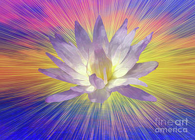 Royalty-Free and Rights-Managed Images - Lotus Flower by Bruce Rolff