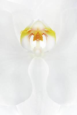 Shark Art - Orchid Flower Closeup by Aleksey Tugolukov