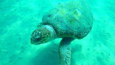 Kids Alphabet - Sea Turtle Caretta - Caretta Zakynthos Island Greece by GiannisXenos Underwater Photography