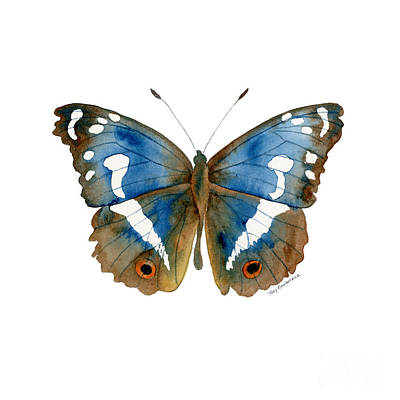 Animals Paintings - 78 Apatura Iris Butterfly by Amy Kirkpatrick