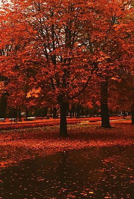 Pittsburgh According To Ron Magnes - Autumn nature in park, fall leaves and trees outdoors by Anneleven Store