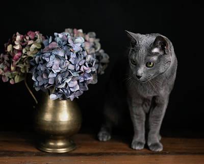 Animals Photos - Russian Blue Cat by Nailia Schwarz