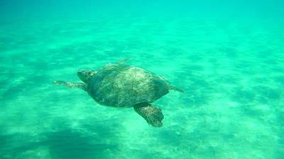 Comic Character Paintings - Sea Turtle Caretta - Caretta Zakynthos Island Greece by GiannisXenos Underwater Photography