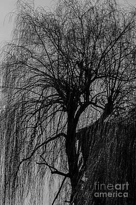 Basketball Patents - A Bare Tree. by Alexander Vinogradov