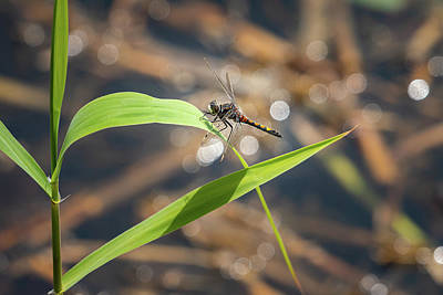 Outerspace Patenets Royalty Free Images - A beautiful dragonfly resting on a plant in water Royalty-Free Image by Stefan Rotter