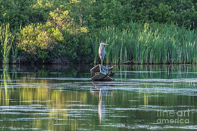 Vintage Performace Cars - A Blue Heron Grace by Kevin Giambertone