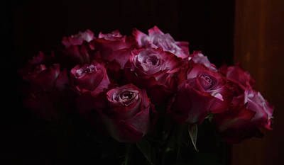 Abstract Animalia Royalty Free Images - A Dozen Roses Royalty-Free Image by Whispering Peaks Photography
