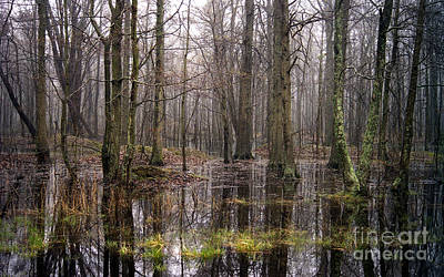 Achieving - A Fine Day In The Swamp by Skip Willits