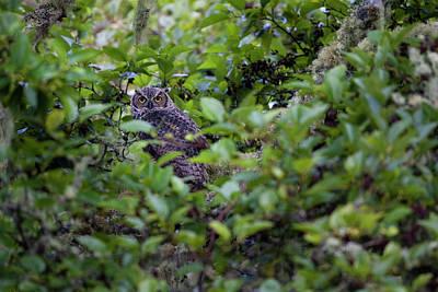 Photograph - A hidden Great Owl by Emmanuel Rondeau