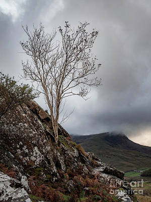 Photograph - A Lone Tree in The hills of Snowdonia National Park by Andrew George Photography