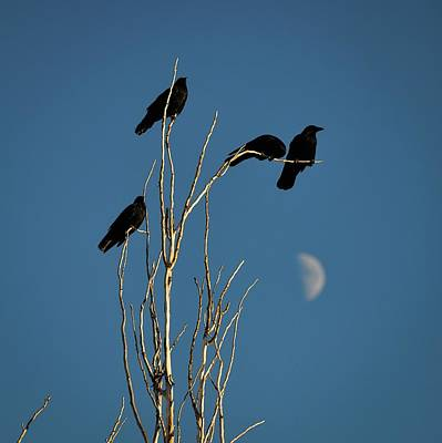 Graduation Sayings - A Murder of Crows by Rebecca Herranen