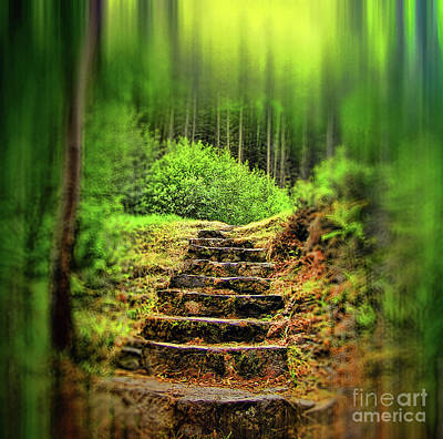 Photograph - A Path in the Forest by Dave Harnetty