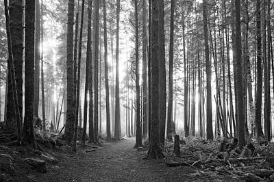 Scifi Portrait Collection - A Path Through The Old Growth Black and White by Allan Van Gasbeck