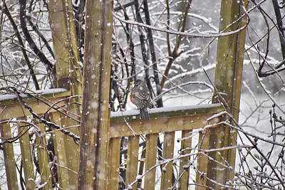 Impressionist Landscapes - A Robin on a Snowy Day by Norman Gragasin
