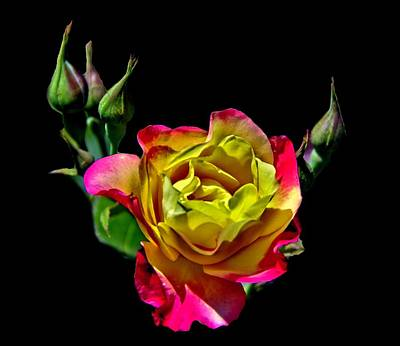 Photograph - A Rose For You by Allen Nice-Webb