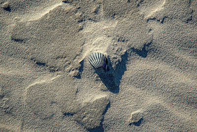 Catch Of The Day - A Single Shell on the Beach by Anthony Doudt
