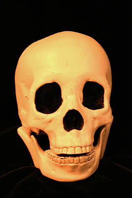 Rights Managed Images - A Skull Royalty-Free Image by Robert Tubesing