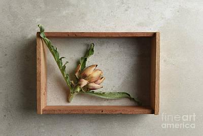 On Trend Breakfast - A small dried artichoke in a shadow box on a gray tile  by Steve Cukrov