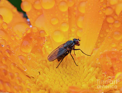 Photo Royalty Free Images - A Small Fly Royalty-Free Image by Mitch Shindelbower