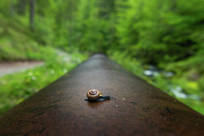 Photograph - A small snail crawling on an iron pipe by Stefan Rotter
