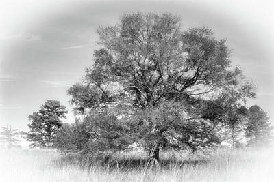 Fruits And Vegetables Still Life - A Tree, In Gray by David Beard