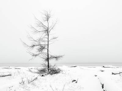 Latidude Image - A Tree on the Edge of the Sea Black and White by Allan Van Gasbeck