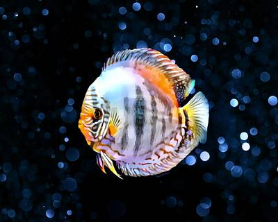 A White Christmas Cityscape - A Tropical Discus Portrait by Scott Wallace Digital Designs