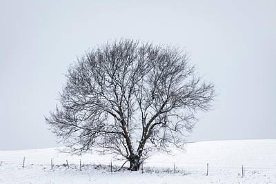 Giuseppe Cristiano - A Winter Tree by Scott Bean