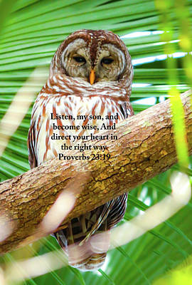 Photograph - A Wise Old Owl by Kevin Banker