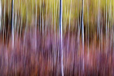 Farm Life Paintings Rob Moline - Abstract Aspens 1 by Jackie Novak