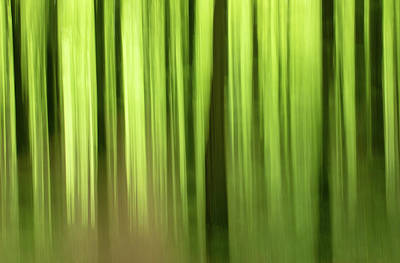 Photograph - Abstract Trees by Peter McCabe