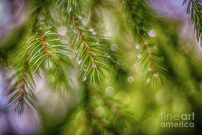 Royalty-Free and Rights-Managed Images - After the rain 3 by Veikko Suikkanen