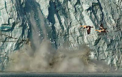 Photograph - Alaska Glacier Caving Startled King Eider's by Russ Harris