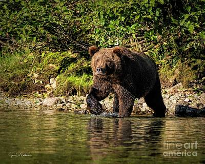 Christmas Christopher And Amanda Elwell - Alaskan Brown Bear - Fishing for Breakfast by Jan Mulherin