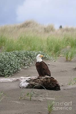 Beach House Signs - Alert Bald Eagle on Beach by Carol Groenen