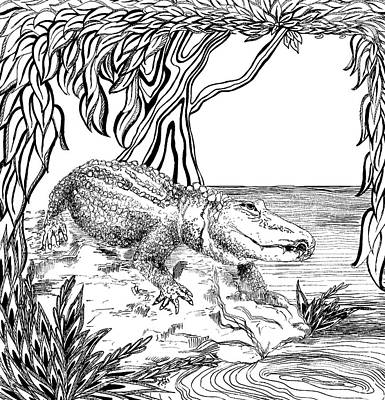 Animals Drawings - Alligator by Jennifer Wheatley Wolf