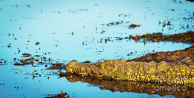 Royalty-Free and Rights-Managed Images - Alligator by THP Creative
