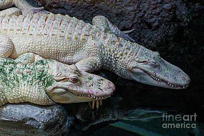 Rowing - Alligators by Nick Zelinsky Jr