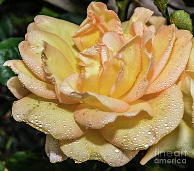 Airplane Paintings - Alluring Gold Struck Rose by Cindy Treger