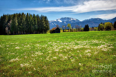 Sean Rights Managed Images - Alpine Meadow Royalty-Free Image by Edmund Nagele