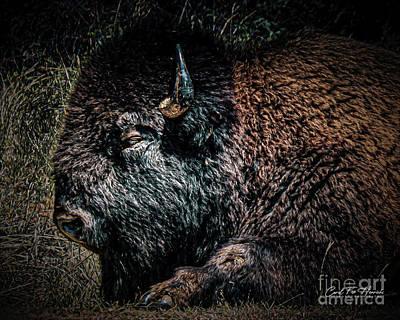 Photograph - American Bison by Carol Fox Henrichs