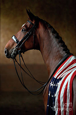 Photograph - American Dream by Shelley Paulson