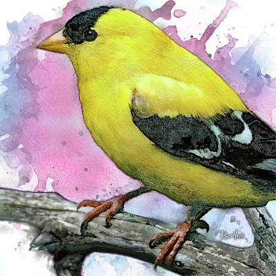 Painting - American Male Goldfinch by Russ Harris