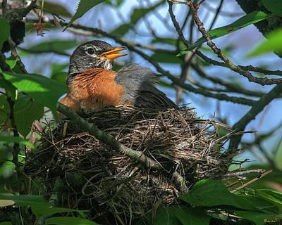 Photograph - American Robin Sitting on Nest DSB0369 by Gerry Gantt