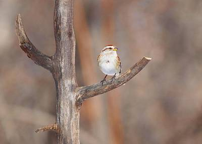 Farmhouse - American Tree Sparrow by Marlin and Laura Hum